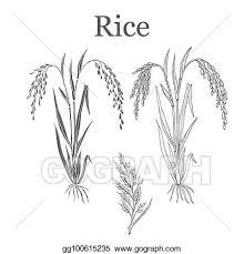 rice plant clipart. Unique Clipart Rice Plant Vector Illustration On Plant Clipart