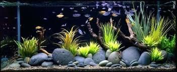 aquarium decoration ideas unreal good fish tank decoration ideas aquarium decoration ideas diy