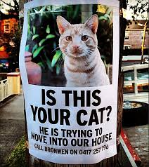 Missing Cat Poster Template Missing Cat Poster Template Awesome 34 Best Pics Lost Pet Poster