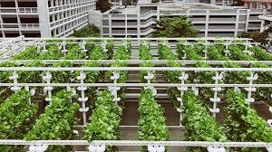 rooftop farming sites at hdb car parks