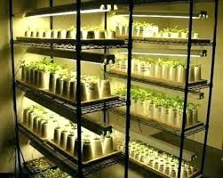 cfl grow light bulbs compact fluorescent lights for growing diy setup