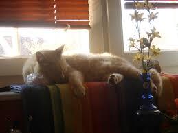 Eine Katze Kommt Ins Haus Katzenblog Katzenflüstern