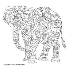 Elephant Coloring Pages Pinterest Dropnewsme