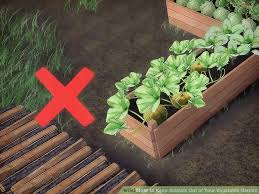 image titled keep animals out of your vegetable garden step 9
