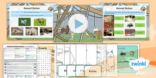 Science Animals Including Humans Animal Babies Year 2 Lesson Pack 1