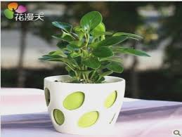 small plants for office. Plants For Office Desk | Crafts Home Regarding Small .