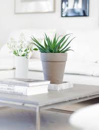 Accessories: Pilea Peperomioides Indoor House Plant - Indoor Plants