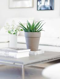 Easy Houseplant Ideas Aloe