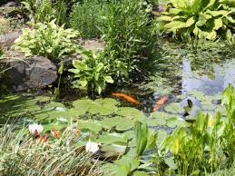 Small Picture How to Design a Fishpond HGTV
