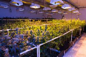 Vpd Chart High Times 10 Must Know Tips To 10x Your Cannabis Grow Grothority