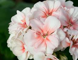 Image result for flower that isn't as beautiful as the rest
