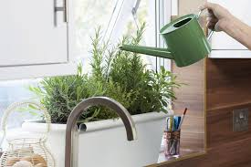 person watering herbs growing in pot on kitchen window sill