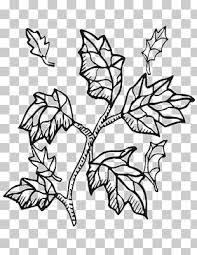 coloring book twig tree branch tree png clipart