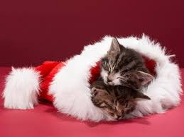 Christmas Cat Wallpaper - WallpaperSafari