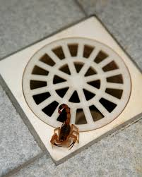 Resultado de imagem para escorpião saindo no ralo
