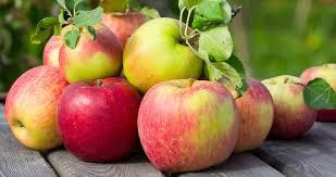 Výsledek obrázku pro likvidace jablek