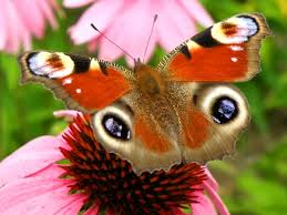real beautiful colorful butterflies. Simple Real The Breathtaking Colors Of Most Beautiful Butterflies 17 Pictures 18 Throughout Real Beautiful Colorful Butterflies U