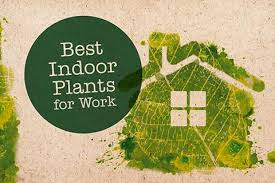 Best indoor plants for office Snake Plant Ingamersinfo 12 Indoor Plants For The Office