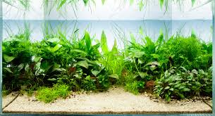 Low Light Cold Water Aquarium Plants Top 5 Benefits Of Aquarium Plants The Fishroom Cheshire
