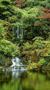 Japanese Gardens, trees, waterfall ...