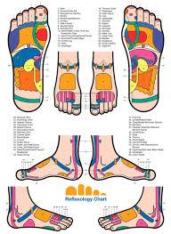 Thai Foot Reflexology Chart Reflexology Thai Foot Massage Hand Reflexology Foot