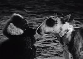 sparky the dog frankenweenie. sparky in love the dog frankenweenie
