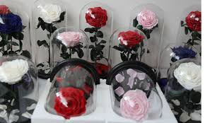 small size long lasting preserved roses in glass dome 01