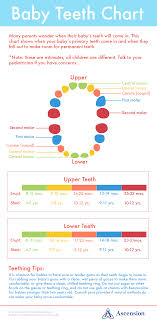 Which Baby Teeth Fall Out Chart Baby Teeth Chart Ascension Blog