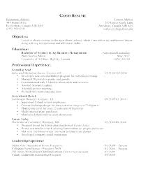Best Job Objectives For Resumes Good Objectives For Resumes For Students Simple Resume Format