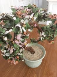 jade bonsai tree raleigh nc