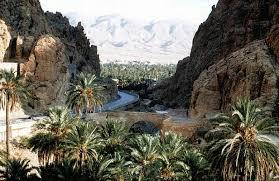 رحلة إلى بسكرة بالجنوب الجزائري Images?q=tbn:ANd9GcTdarW7UI5Dfl5sBr772M-oXaQbmZcEU5ekwJ8UAIUSDYOiIiP3gg