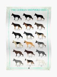 German Shepherd Coat Colors Poster