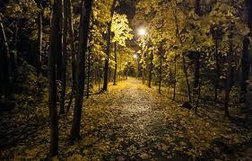 Wallpaper autumn, night, the city, Park ...