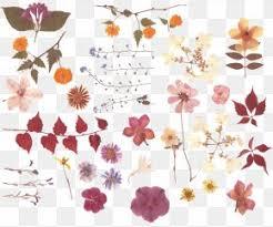 Flower Pressed Paper Pressed Flower Craft Images Pressed Flower Craft
