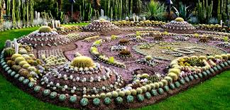 Small Picture Brilliant Cactus Gardens Garden And Design Ideas