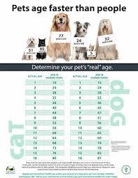 Age Of A Cat Chart Stellas Cat Log Pet Age Chart Companion Veterinary Hospital