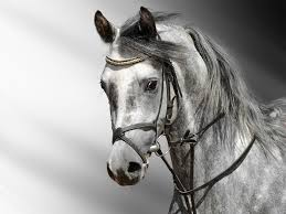 Horse Desktop Wallpaper Hd 7032338