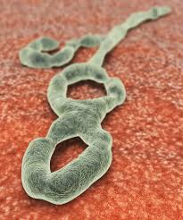 toward a cure for ebola and rabies com ebola virus