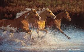 wild horses running through water. Exellent Through 1195751081 U003ciu003eThundering Wateru2014Horses  Inside Wild Horses Running Through Water