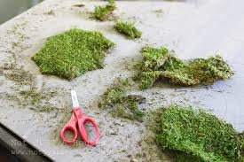 Moss Art (and why failures are sometimes a good thing) | Stacy ...