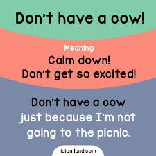 Image result for dont have a cow