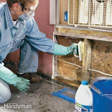 How To Remove Mold: Mold Remediation — The Family Handyman