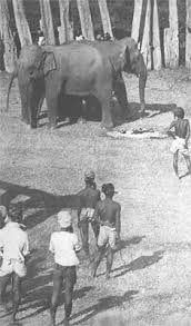 george orwell shooting an elephant george orwell shooting an elephant
