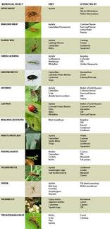 Beneficial Insects Chart 76 Best Beneficial Insects Images In 2019 Beneficial