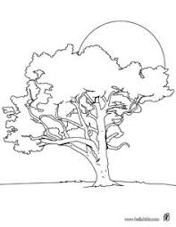 tree coloring pages oak tree