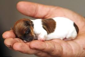 how to care for newborn puppies