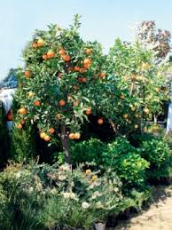 3 Tips To Make Growing Fruit Trees EasierUnderplanting Fruit Trees