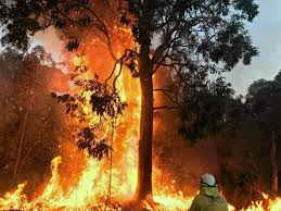 Image result for NSW firefighters on high alert