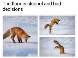 French google translator furry meme. Drinking Fox Meme Apsgeyser