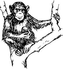 Small Picture Chimpanzee Sitting on Tree Coloring Page Chimpanzee Sitting on